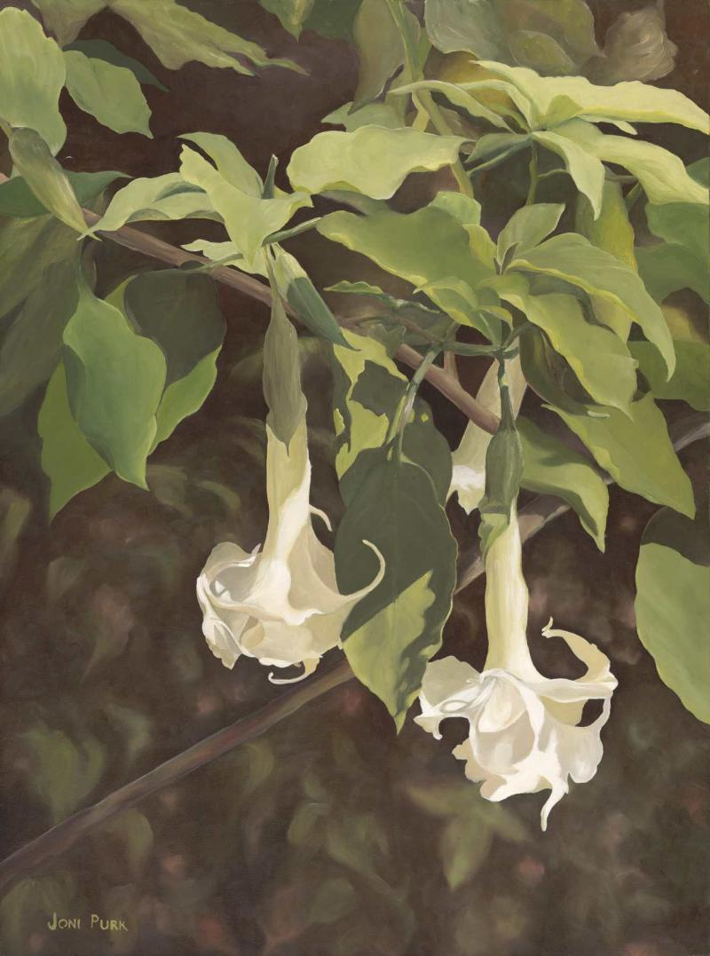 Angel's Trumpet - from original oil - Lithograph on luster archival paper